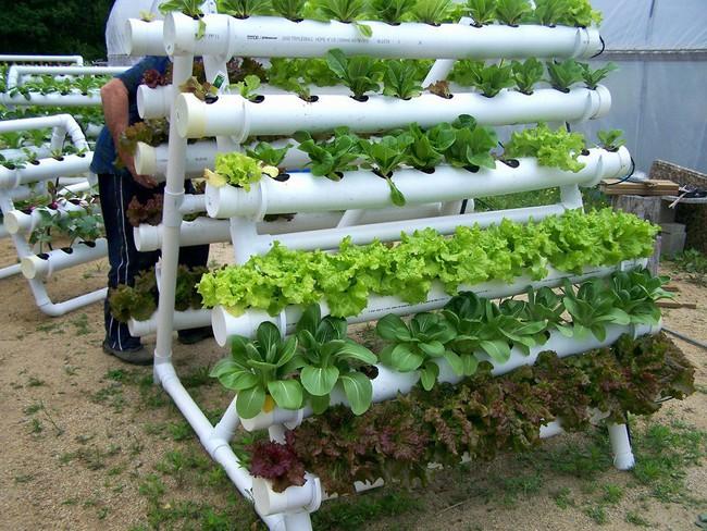 Mách bạn cách trồng rau xanh ngay trong nhà phố mà vẫn đảm bảo chất lượng và số lượng - Ảnh 3.