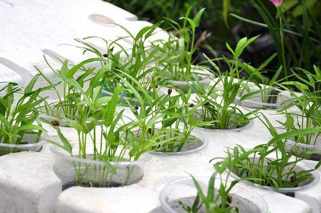 Mách bạn cách trồng rau xanh ngay trong nhà phố mà vẫn đảm bảo chất lượng và số lượng - Ảnh 4.