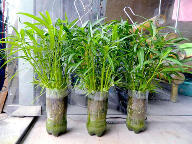 Mách bạn cách trồng rau xanh ngay trong nhà phố mà vẫn đảm bảo chất lượng và số lượng - Ảnh 5.