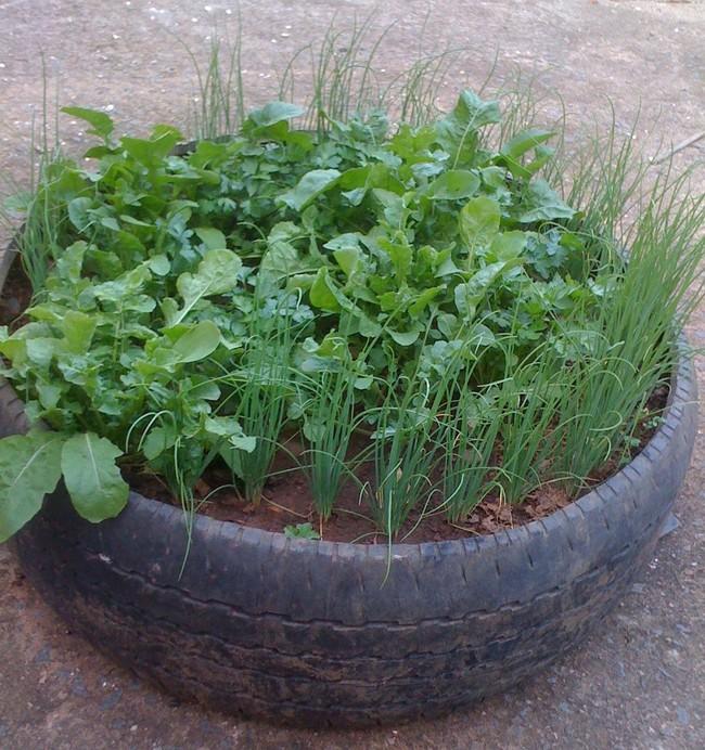 Mách bạn cách trồng rau xanh ngay trong nhà phố mà vẫn đảm bảo chất lượng và số lượng - Ảnh 6.