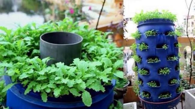 Mách bạn cách trồng rau xanh ngay trong nhà phố mà vẫn đảm bảo chất lượng và số lượng - Ảnh 7.