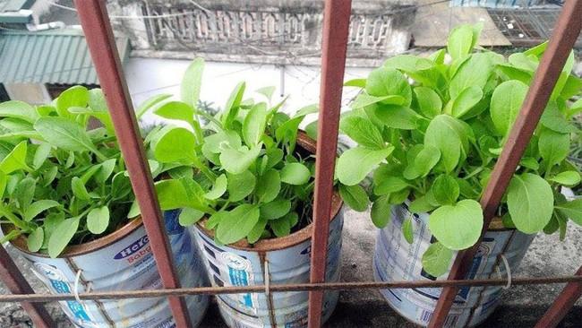 Mách bạn cách trồng rau xanh ngay trong nhà phố mà vẫn đảm bảo chất lượng và số lượng - Ảnh 8.