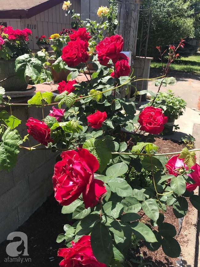 Để chiều lòng vợ, chồng Mỹ thiết kế khu vườn trồng đủ các loại hoa và rau quả Việt để vợ đỡ nhớ quê hương - Ảnh 6.