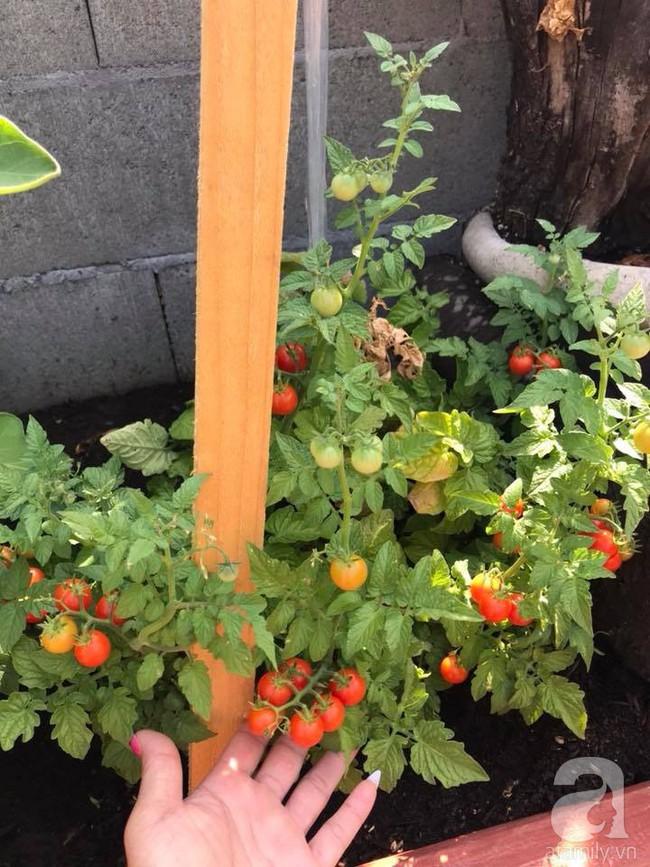 Để chiều lòng vợ, chồng Mỹ thiết kế khu vườn trồng đủ các loại hoa và rau quả Việt để vợ đỡ nhớ quê hương - Ảnh 21.