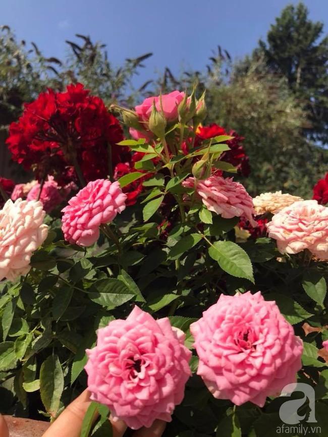Để chiều lòng vợ, chồng Mỹ thiết kế khu vườn trồng đủ các loại hoa và rau quả Việt để vợ đỡ nhớ quê hương - Ảnh 13.