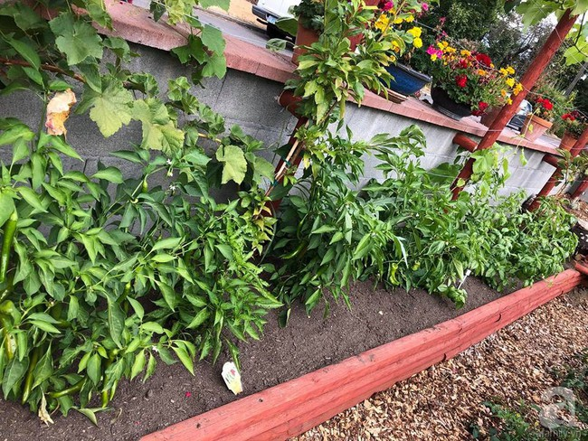 Để chiều lòng vợ, chồng Mỹ thiết kế khu vườn trồng đủ các loại hoa và rau quả Việt để vợ đỡ nhớ quê hương - Ảnh 15.
