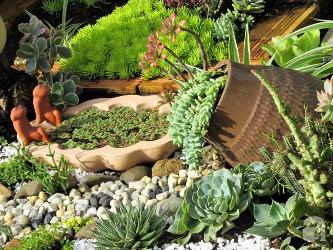 Mẹ bỉm sữa bận rộn chăm con vẫn tạo cả khu vườn sen đá độc đáo từ đồ dùng cũ ở Lâm Đồng - Ảnh 3.