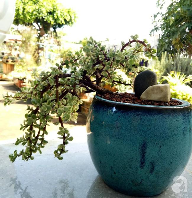 Mẹ bỉm sữa bận rộn chăm con vẫn tạo cả khu vườn sen đá độc đáo từ đồ dùng cũ ở Lâm Đồng - Ảnh 20.