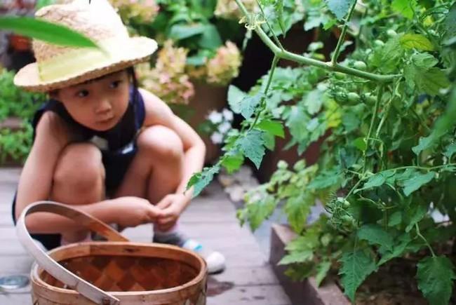 Bà mẹ đơn thân cùng con gái 5 tuổi dành trọn hai năm để biến sân thượng thành khu vườn đẹp như cổ tích - Ảnh 9.