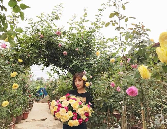 Choáng ngợp trước vườn hoa hồng vài nghìn gốc của mẹ trẻ xinh đẹp ở Thái Nguyên - Ảnh 3.
