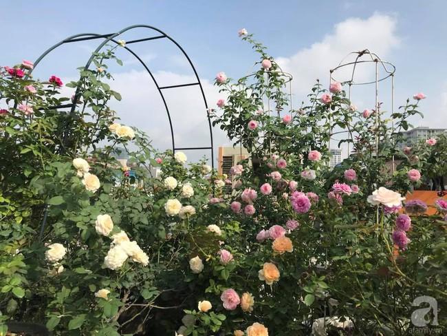 Sau 3 năm trồng hoa hồng, người phụ nữ Hà Nội đã sở hữu một vườn hồng thơm ngào ngạt trên sân thượng - Ảnh 5.