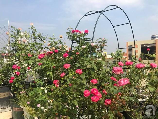 Sau 3 năm trồng hoa hồng, người phụ nữ Hà Nội đã sở hữu một vườn hồng thơm ngào ngạt trên sân thượng - Ảnh 6.