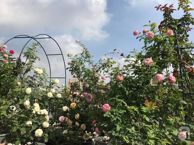 Sau 3 năm trồng hoa hồng, người phụ nữ Hà Nội đã sở hữu một vườn hồng thơm ngào ngạt trên sân thượng - Ảnh 21.