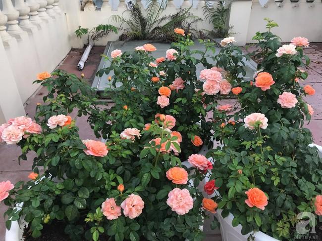 Sau 3 năm trồng hoa hồng, người phụ nữ Hà Nội đã sở hữu một vườn hồng thơm ngào ngạt trên sân thượng - Ảnh 18.