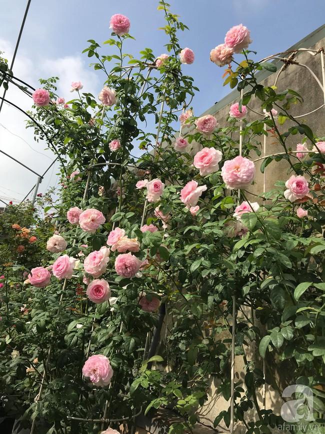 Sau 3 năm trồng hoa hồng, người phụ nữ Hà Nội đã sở hữu một vườn hồng thơm ngào ngạt trên sân thượng - Ảnh 17.