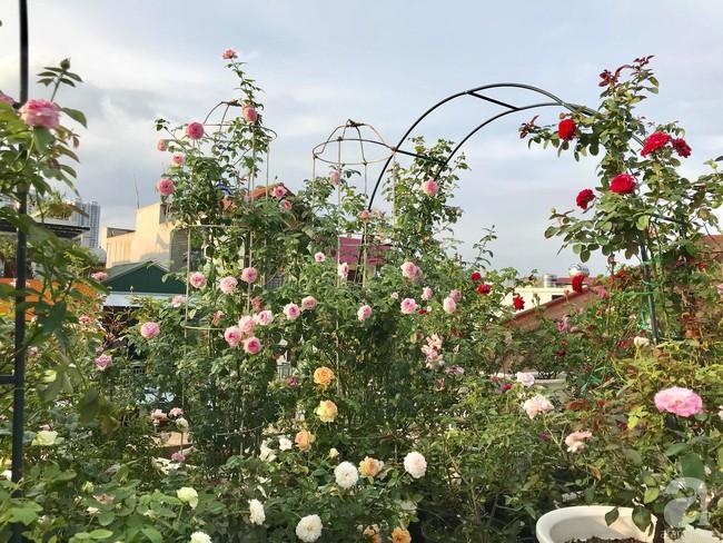 Sau 3 năm trồng hoa hồng, người phụ nữ Hà Nội đã sở hữu một vườn hồng thơm ngào ngạt trên sân thượng - Ảnh 3.