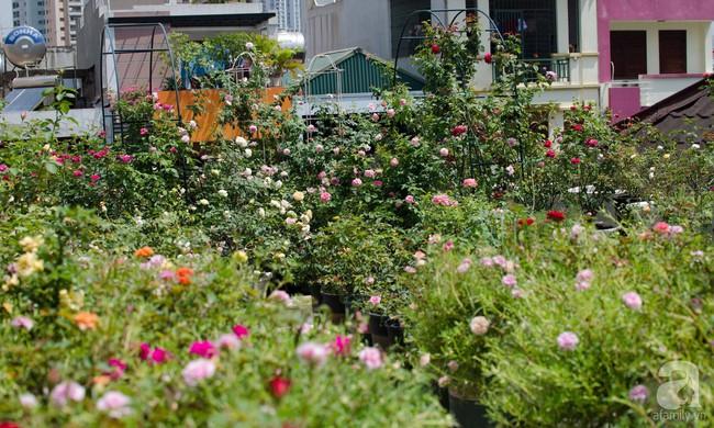 Sau 3 năm trồng hoa hồng, người phụ nữ Hà Nội đã sở hữu một vườn hồng thơm ngào ngạt trên sân thượng - Ảnh 2.