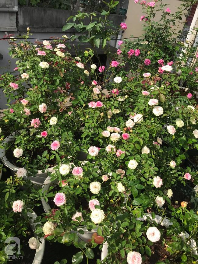 Sau 3 năm trồng hoa hồng, người phụ nữ Hà Nội đã sở hữu một vườn hồng thơm ngào ngạt trên sân thượng - Ảnh 8.