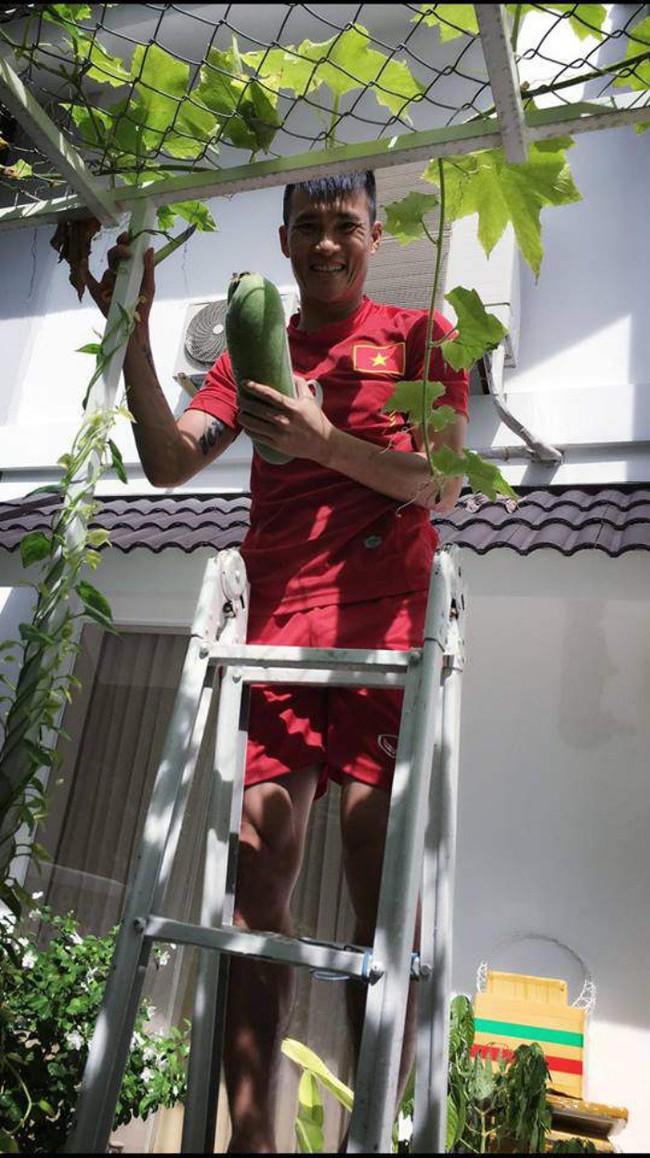 Vợ chồng Công Vinh – Thủy Tiên vui vẻ thu hoạch rau quả sạch trong vườn nhà - Ảnh 10.