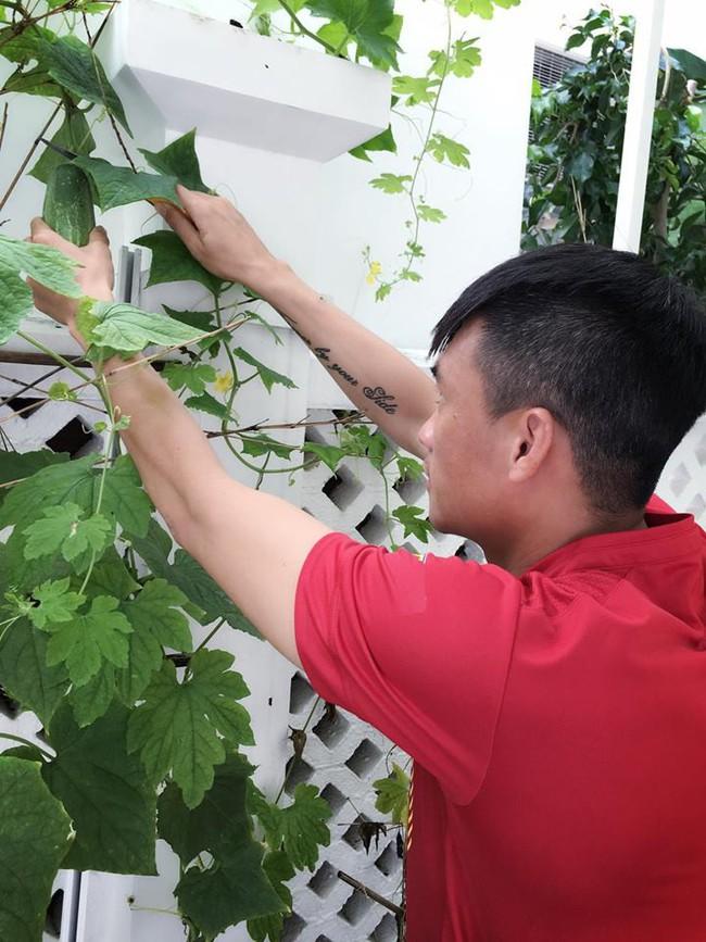 Vợ chồng Công Vinh – Thủy Tiên vui vẻ thu hoạch rau quả sạch trong vườn nhà - Ảnh 9.