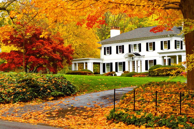 Những ngôi nhà dưới tán lá vàng lãng mạn như một bức tranh phong cảnh tuyệt đẹp - Ảnh 5.