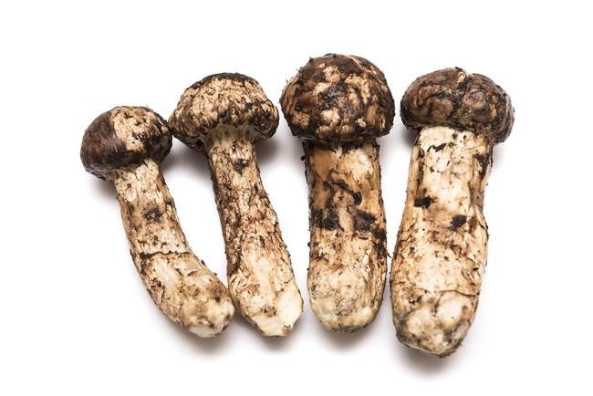 Khám phá matsutake - loại nấm đắt nhất thế giới mang trọn vẹn hương vị mùa thu Nhật Bản, 50 triệu/kg mà vẫn cháy hàng - Ảnh 4.