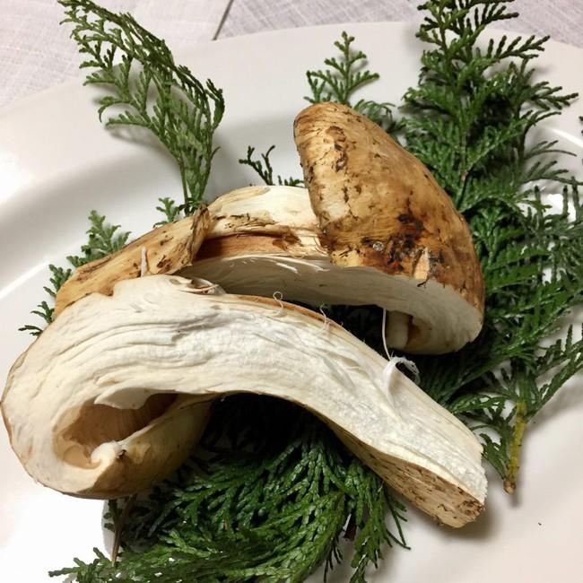 Khám phá matsutake - loại nấm đắt nhất thế giới mang trọn vẹn hương vị mùa thu Nhật Bản, 50 triệu/kg mà vẫn cháy hàng - Ảnh 7.