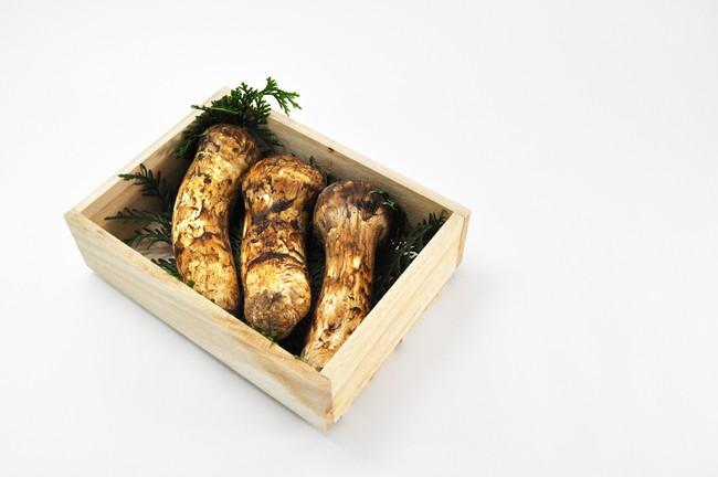 Khám phá matsutake - loại nấm đắt nhất thế giới mang trọn vẹn hương vị mùa thu Nhật Bản, 50 triệu/kg mà vẫn cháy hàng - Ảnh 1.