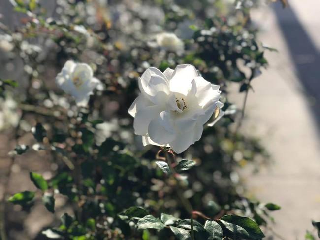 Ngắm vườn rau sạch và hoa tươi vô cùng bình yên của vợ chồng nghệ sĩ Hồng Vân và Lê Tuấn Anh - Ảnh 22.