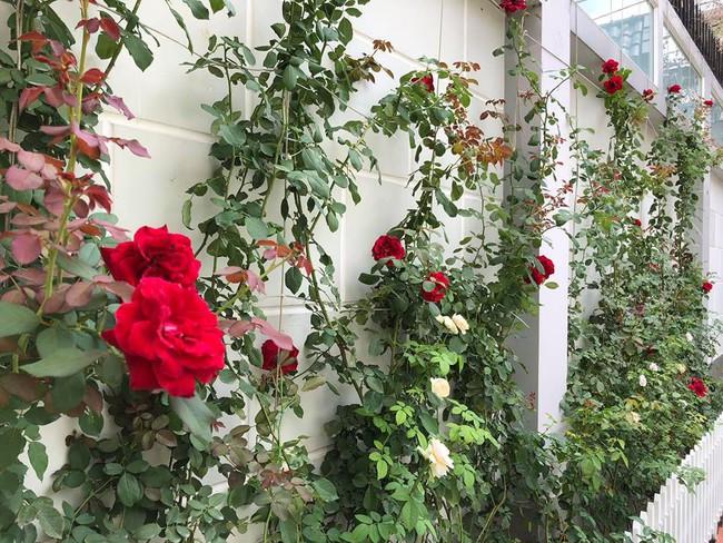 Ngắm vườn rau sạch và hoa tươi vô cùng bình yên của vợ chồng nghệ sĩ Hồng Vân và Lê Tuấn Anh - Ảnh 19.