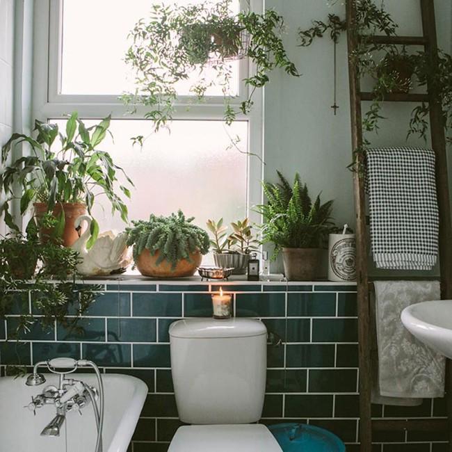 Đem cây xanh vào phòng tắm, xu hướng đang hot hiện nay, trông thì rườm rà nhưng lại đơn giản hơn bạn nghĩ! - Ảnh 6.