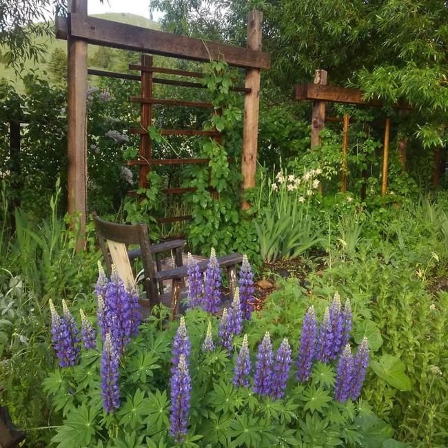 Cuộc sống đẹp như cổ tích của cặp vợ chồng trong căn nhà gỗ cùng mảnh vườn rộng 1.700m²  - Ảnh 7.