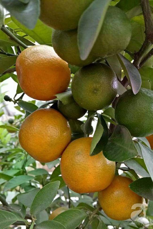 Kinh nghiệm trồng cả vườn cây trái xum xuê như trang trại trên sân thượng của mẹ đảm ở Biên Hòa - Ảnh 9.