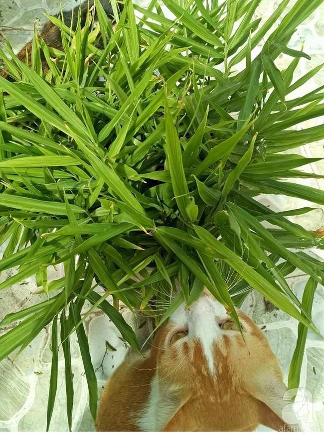 Kinh nghiệm trồng cả vườn cây trái xum xuê như trang trại trên sân thượng của mẹ đảm ở Biên Hòa - Ảnh 16.