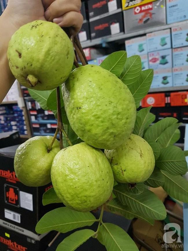 Kinh nghiệm trồng cả vườn cây trái xum xuê như trang trại trên sân thượng của mẹ đảm ở Biên Hòa - Ảnh 3.