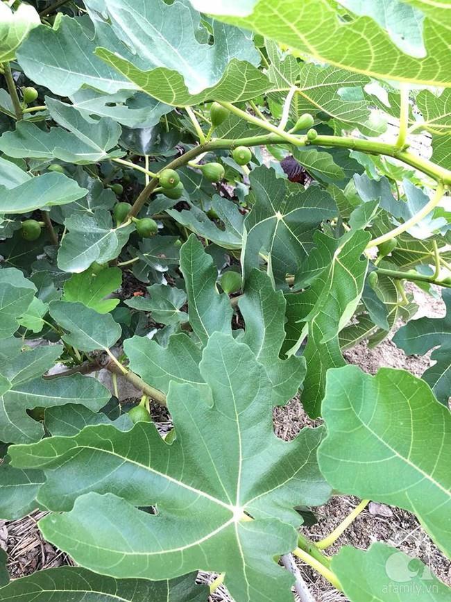 Khu vườn 1000m² giúp mẹ Việt ở Nhật thỏa sức trồng đủ loại rau quả, cây trái của quê hương - Ảnh 21.