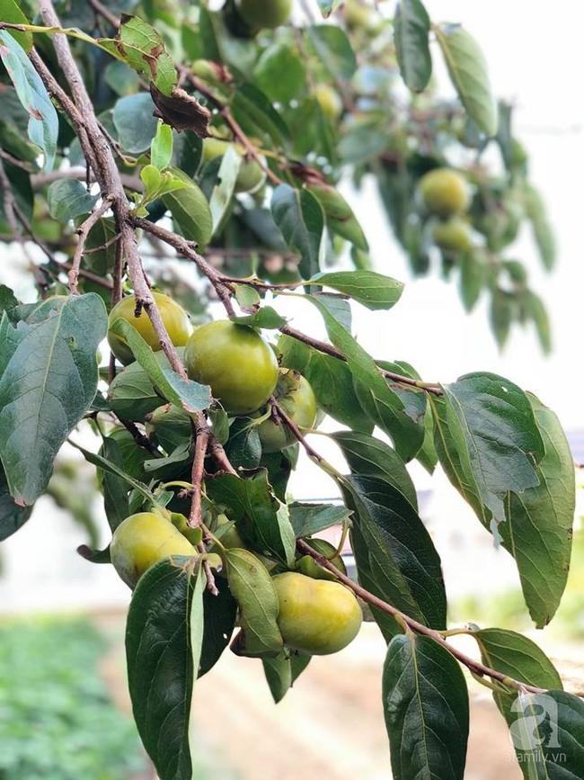 Khu vườn 1000m² giúp mẹ Việt ở Nhật thỏa sức trồng đủ loại rau quả, cây trái của quê hương - Ảnh 11.