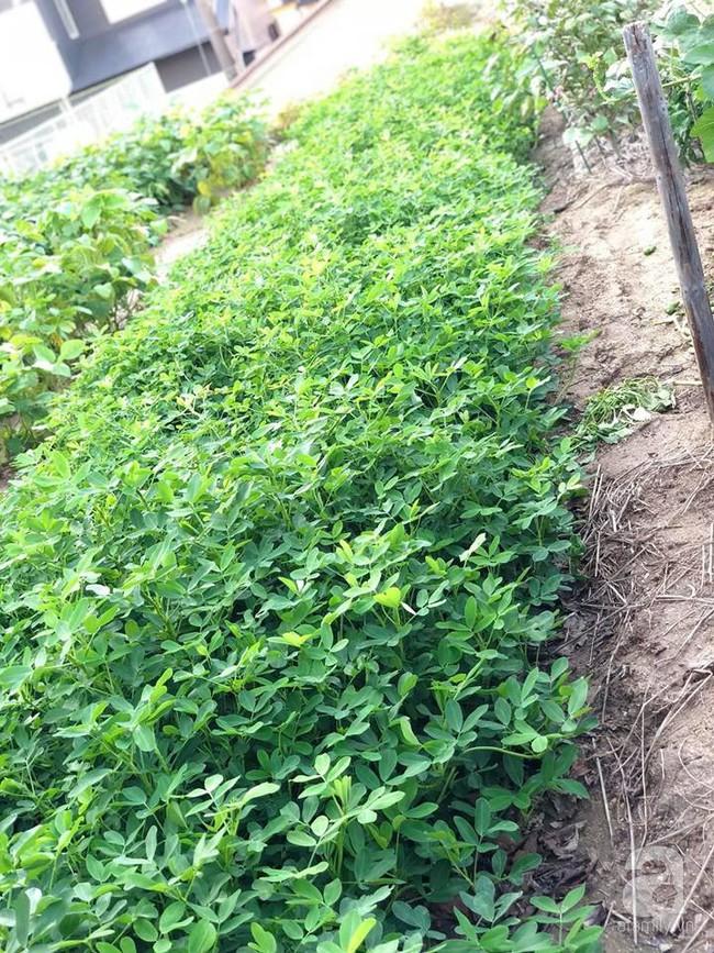 Khu vườn 1000m² giúp mẹ Việt ở Nhật thỏa sức trồng đủ loại rau quả, cây trái của quê hương - Ảnh 8.