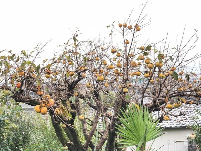 Khu vườn 1000m² giúp mẹ Việt ở Nhật thỏa sức trồng đủ loại rau quả, cây trái của quê hương - Ảnh 12.