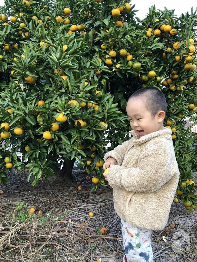 Khu vườn 1000m² giúp mẹ Việt ở Nhật thỏa sức trồng đủ loại rau quả, cây trái của quê hương - Ảnh 3.