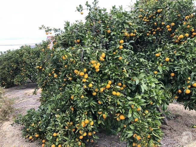Khu vườn 1000m² giúp mẹ Việt ở Nhật thỏa sức trồng đủ loại rau quả, cây trái của quê hương - Ảnh 4.