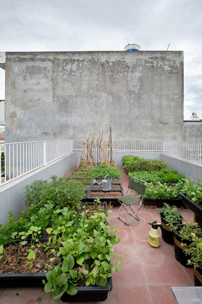 Xây từ miếng đất nhiều nhược điểm, ngôi nhà 85m² ở Hà Nội này vẫn được trầm trồ khen vừa đẹp, vừa xanh - Ảnh 17.