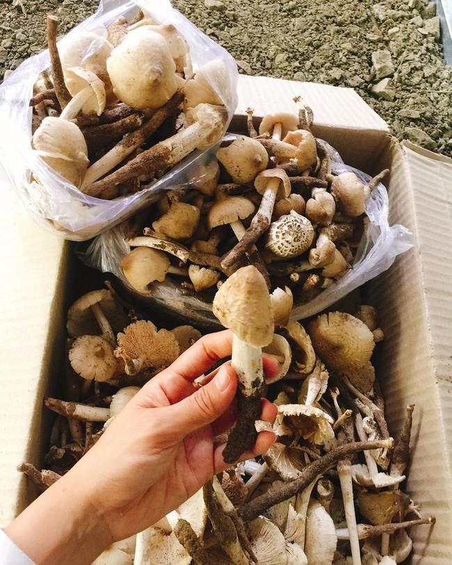 Nấm mối - lộc trời cho thơm ngon, đắt giá nhất Việt Nam và chuyến hành trình săn tìm đầy gian khó mỗi mùa mưa - Ảnh 5.