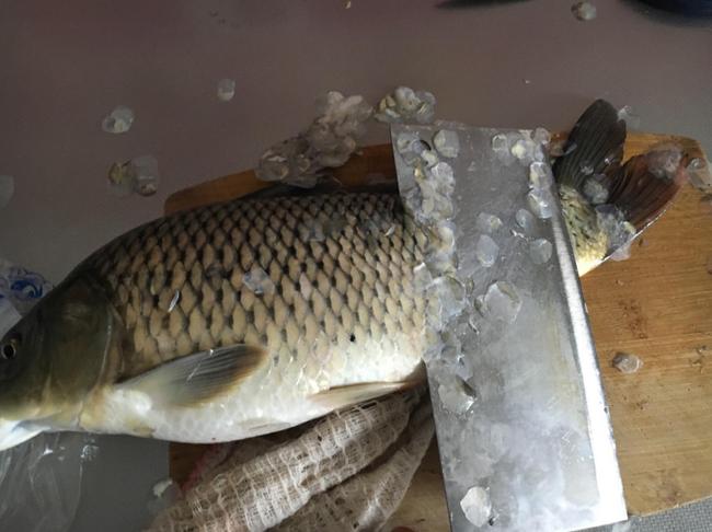 Bất kể là cá gì, nếu không làm sạch 3 bộ phận này thì món cá của bạn sẽ chẳng bao giờ ngon và hết được mùi tanh - Ảnh 1.