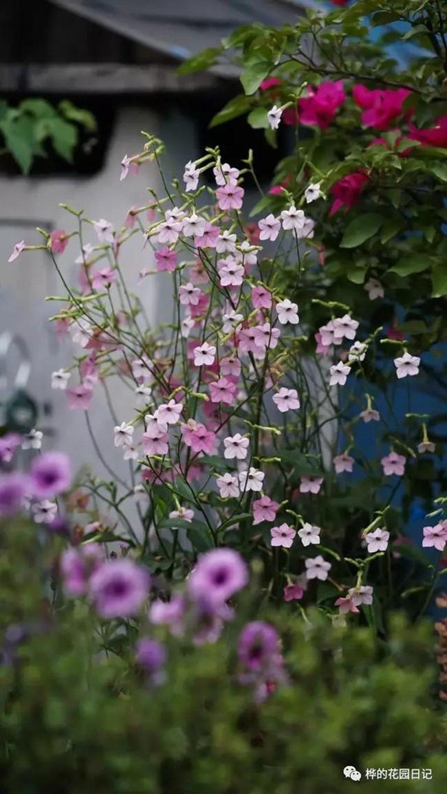 Khu vườn dịu dàng nét xuân, trăm hoa đua nở trên sân thượng 88m² của bà mẹ hai con  - Ảnh 24.