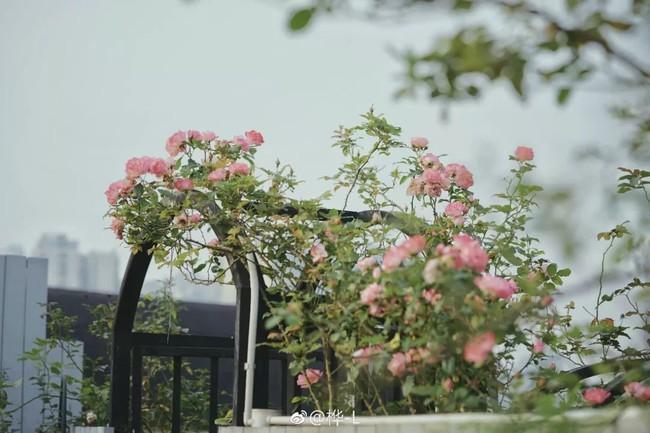 Khu vườn dịu dàng nét xuân, trăm hoa đua nở trên sân thượng 88m² của bà mẹ hai con  - Ảnh 17.