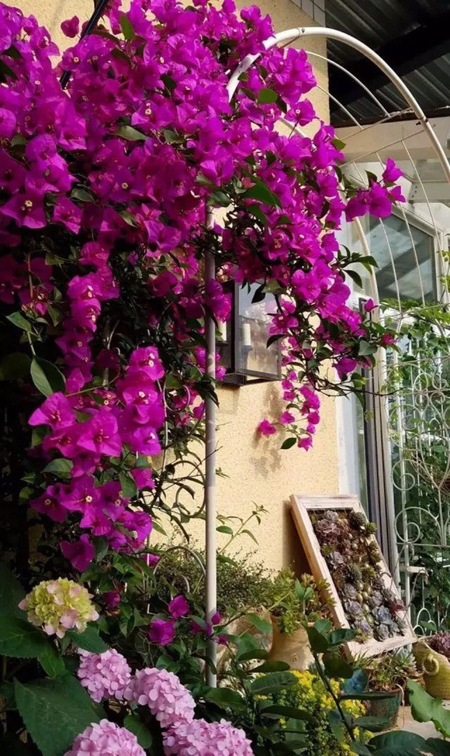 Khu vườn dịu dàng nét xuân, trăm hoa đua nở trên sân thượng 88m² của bà mẹ hai con  - Ảnh 7.