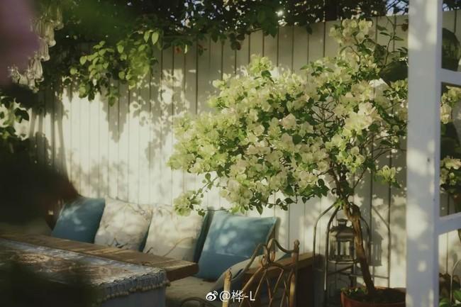 Khu vườn dịu dàng nét xuân, trăm hoa đua nở trên sân thượng 88m² của bà mẹ hai con  - Ảnh 6.