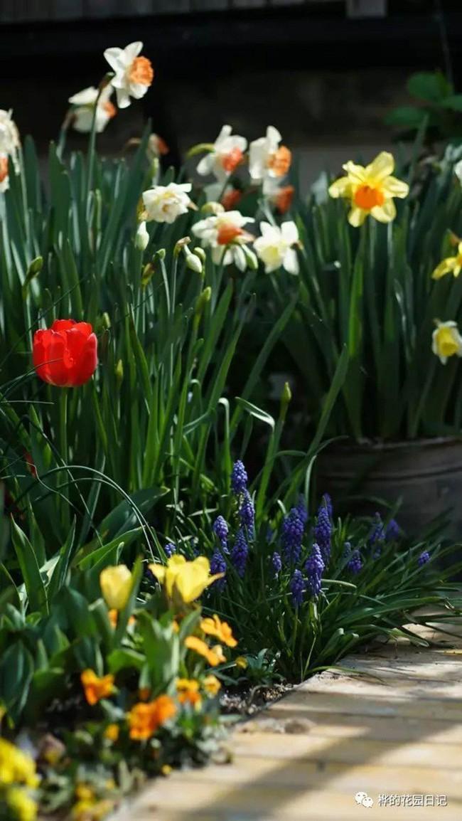 Khu vườn dịu dàng nét xuân, trăm hoa đua nở trên sân thượng 88m² của bà mẹ hai con  - Ảnh 5.