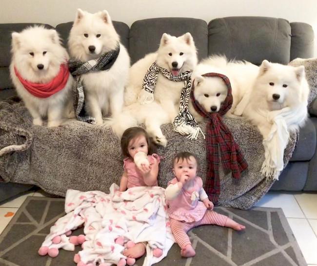Gia đình nổi như cồn trên mạng xã hội với loạt ảnh chụp hai chị em và cả đàn chó cưng trắng như tuyết - Ảnh 1.